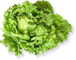 batávia saláta