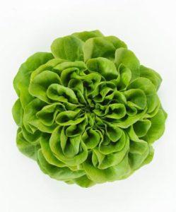 salanova saláta